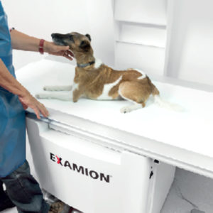 Examion X-DR Static Veterinary Bucky Systems